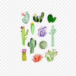 Cactaceae Drawing Watercolor Painting Succulent Pl