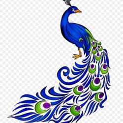 Clip Art Peafowl Illustration Image Vector