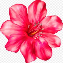 Clip Art Portable Network Graphics Flower Desktop Exotic Pink Flower Png Clipart Picture