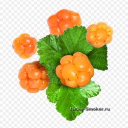 Cloudberry Red Raspberry Blackcurrant Stockmeier