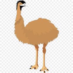 Common Ostrich Bird Emu Clip Art Legs