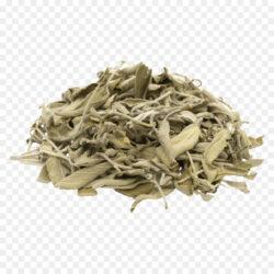 Common Sage Tea Herb Food Drying Dry Parsley