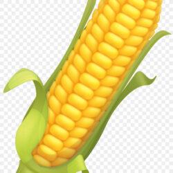 Corn Flakes Maize Corncob Illustration Corn Png Vector