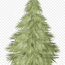 Spruce Christmas Tree Fir Christmas Ornament