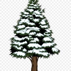Spruce Fir Pine Christmas Tree Christmas Ornament Evergreen
