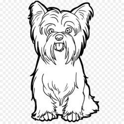 Yorkshire Terrier Scottish Terrier West Highland W Dog Png Clipart  Free Downloads Graphic Design