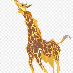 Giraffe Clipart Giraffe Eating Leaves 0o871